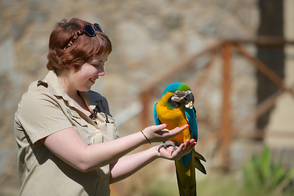 . Ashley feeds a blue and gold Maccaw. Photo by Adam Kent