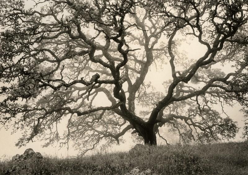 Branching Out, Mt. Diablo, California
