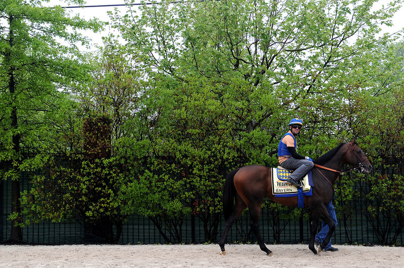 . Bayern walks to the track in preparation for the 139th Preakness Stakes at Pimlico Race Course on May 15, 2014 in Baltimore, Maryland. (Photo by Patrick Smith/Getty Images)