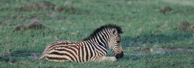 Botswana-20121125-163.jpg