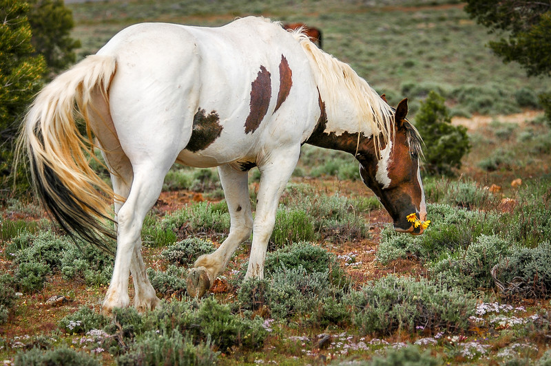 Wild Horse With Flowers