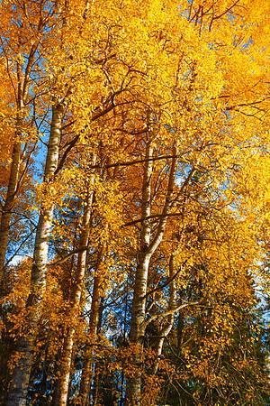 Autumnal Glories / Великолепия Осени