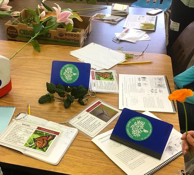 LATO OA SM Botany 20-01-31 - 2.jpg