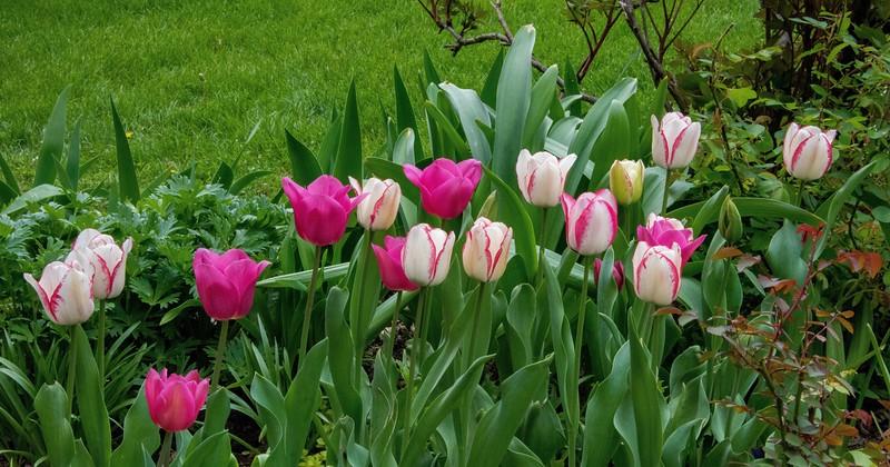 Garden 1, 082.jpg