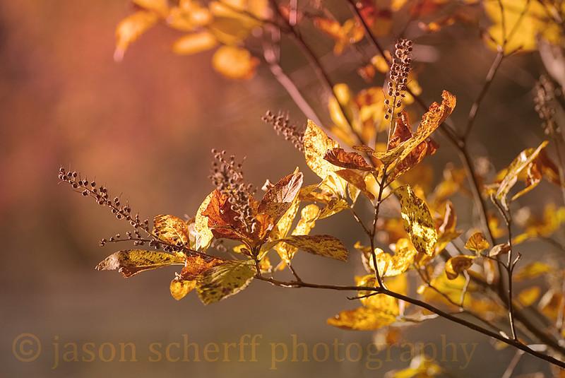 20121017-13DC7500.jpg