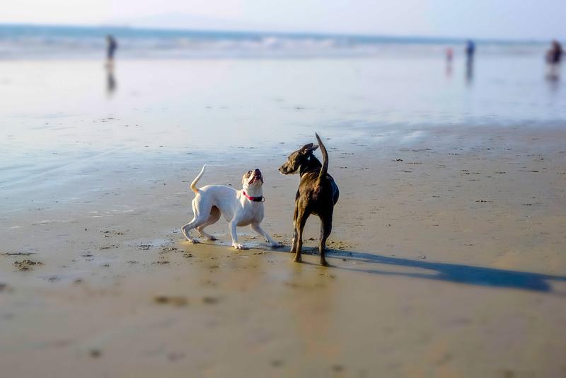 dogs_beach-16.jpg