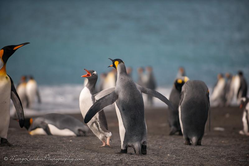 Antarctic-88