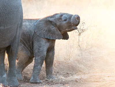 Africa 2014