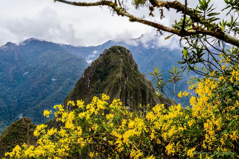 Peru 2017-5480.jpg