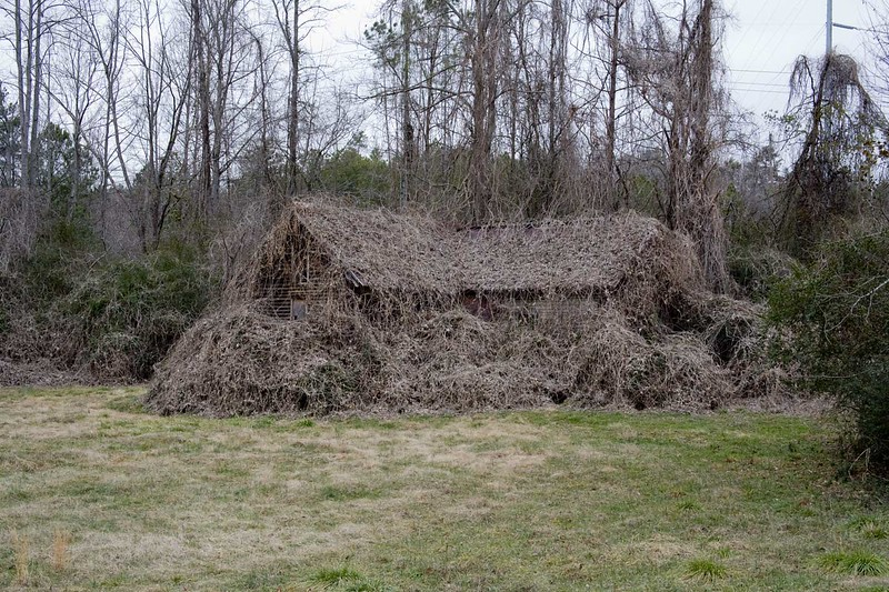 Winter view of a house completely covered in kudzu near Ellijay, Ga.