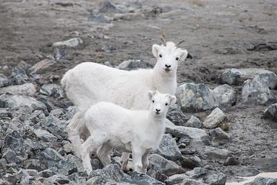 Sheep Mountain Canada