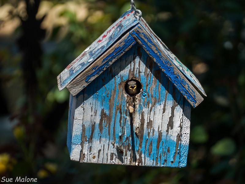 Little Bird in the Bel House-6.jpg