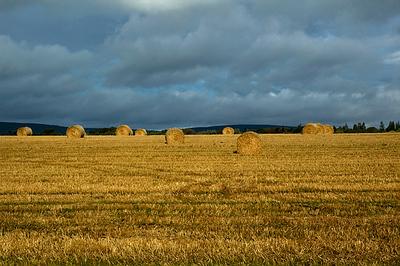 Scotland - The Black Isle