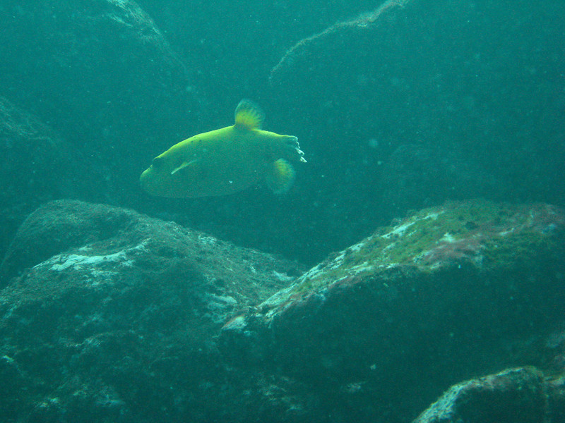 Diving in the Galapagos (317 of 392)