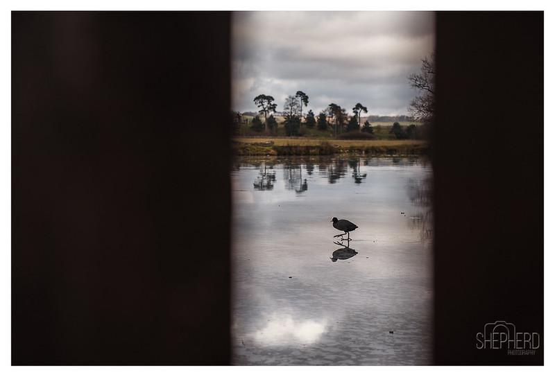 bird22y.jpg