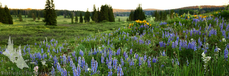 _DLH2330 Dumont Lake Flowers[1-3].jpg