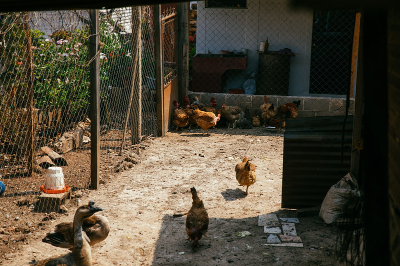Guatemala2017-307.jpg