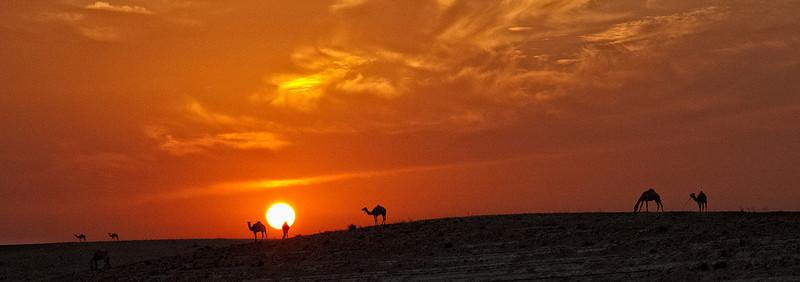 152011124820958_DSC_0684-camels.jpg