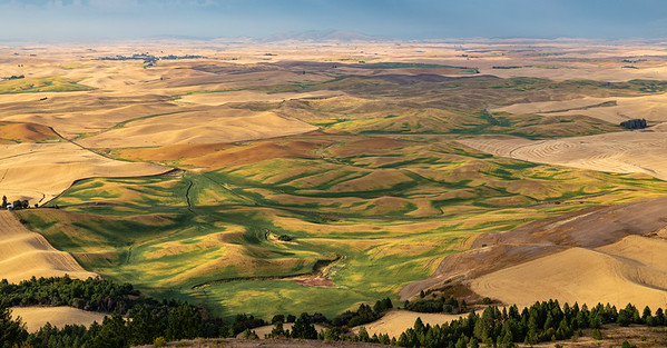 Palouse in the Fall