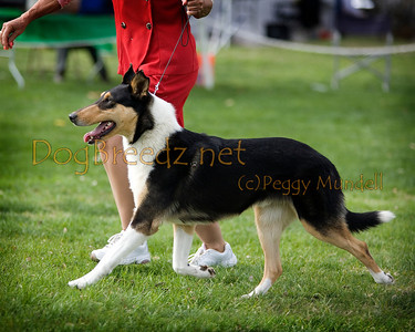 2014 OEDC - Collie (Smooth)