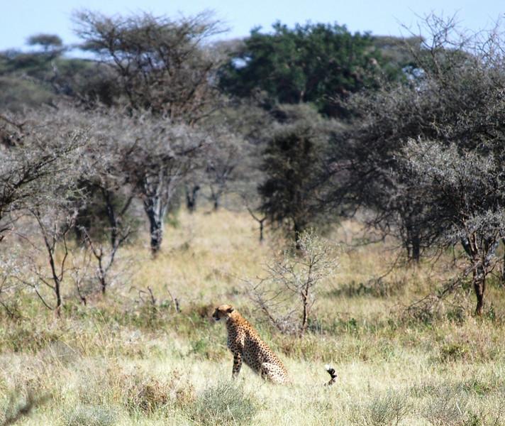 Serengeti (136).JPG