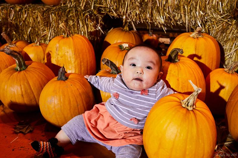 pumpkin__14.jpg