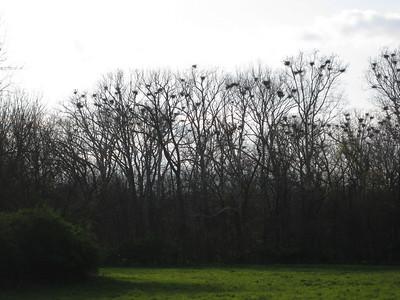 2009 Heron Count