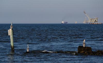 Dauphin Island 2012-02-07