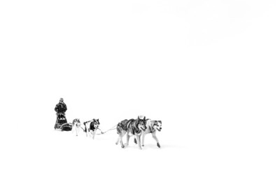 Dog sledding (day 4)