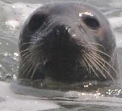 bird,seal,family 059.JPG