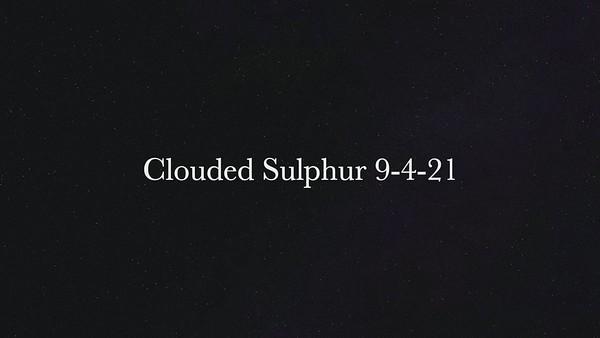 Clouded Sulphur 9-4-21