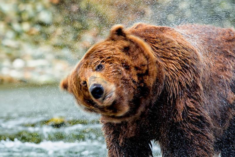 Alaska_2013_IG3A4788.jpg