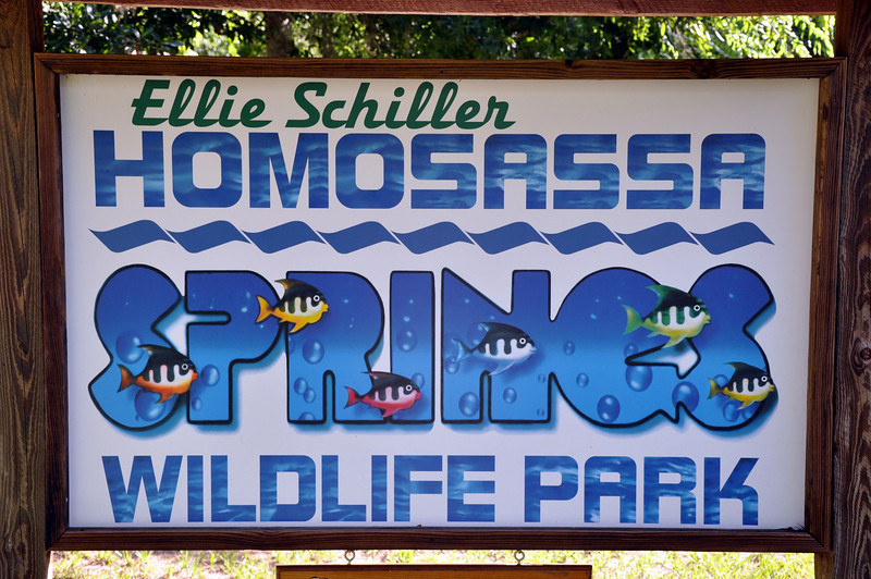 Homosassa Springs State Park is located around the freshwater spring that flows over 60 million gallons of water a day.  The park is a year-around home to several manatees and a wooden boardwalk provides a great venue for viewing the resident Florida wildlife including numerous manatees, flamingos, alligators, birds and a rare Florida Panther.