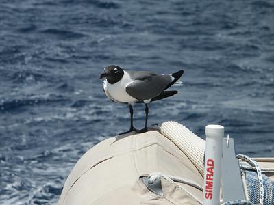 Sailing - July 3