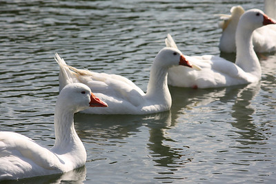 Mai-Liao Duck Pond