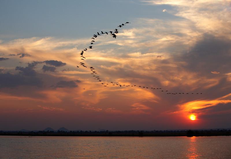 Cormorants at Sunset - 6524.jpg
