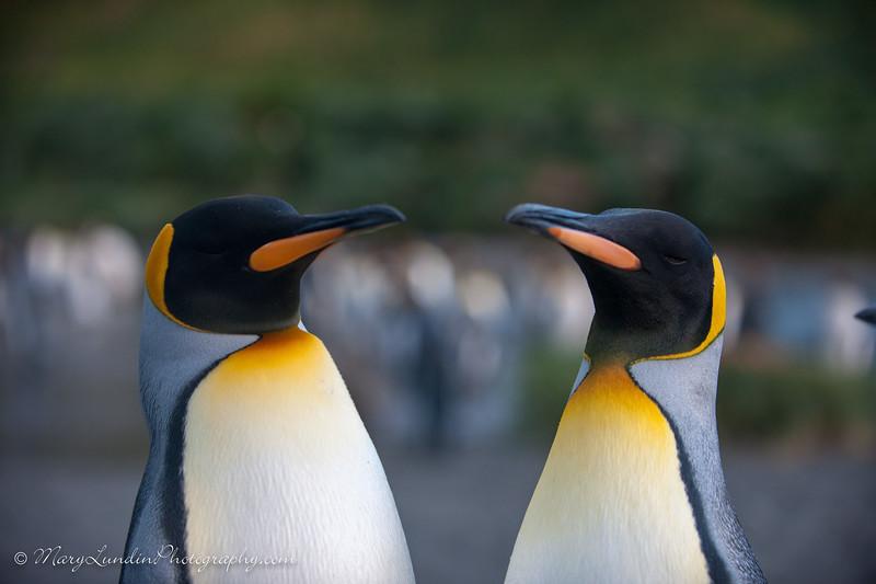 Antarctic-79