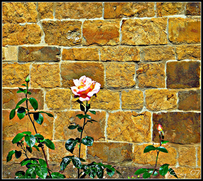 Contradictions Running Wilde 