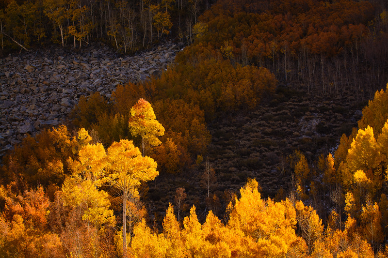 Eastern-Sierras-Fall-Colors-Close-Up-1.jpg