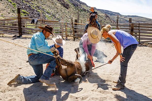 Cattle Branding near Hot Creek Canyon, Central Nevada