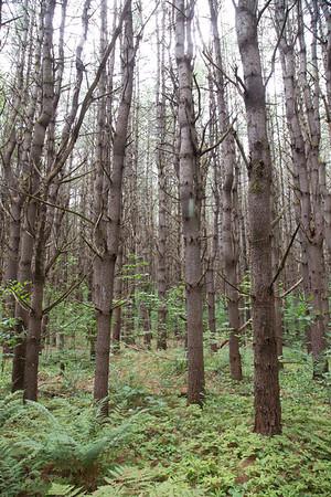 2016-07-23 NH TREES