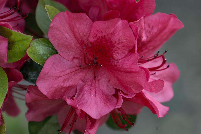 160415_6321_Flowers_30-1p1.jpg