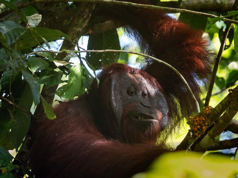 Danum Valley Borneo Rainforest Lodge 5-11-18135301.jpg