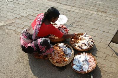 India 2009 (David's Pictures)