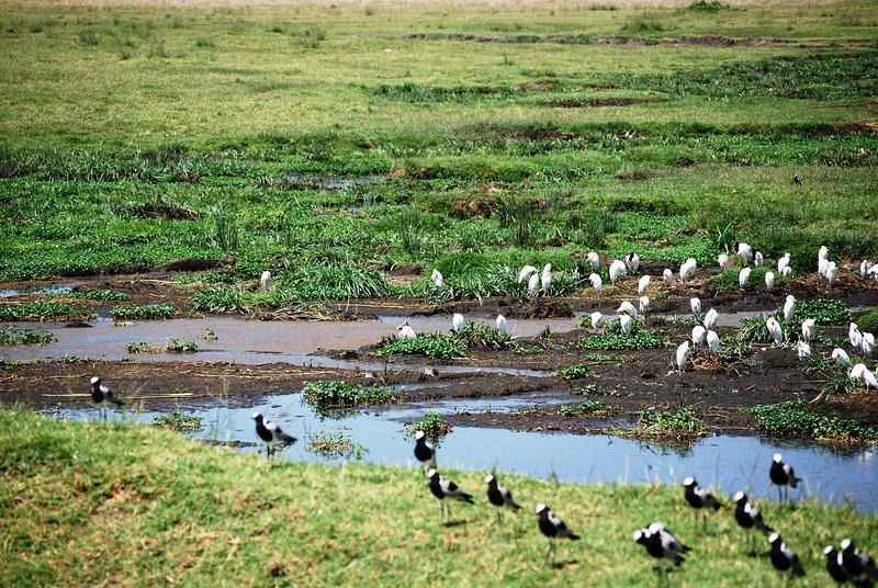 Ngorongoro (178).JPG