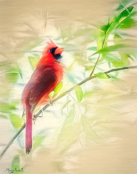 cardinal_DSC4069_2-copy.jpg