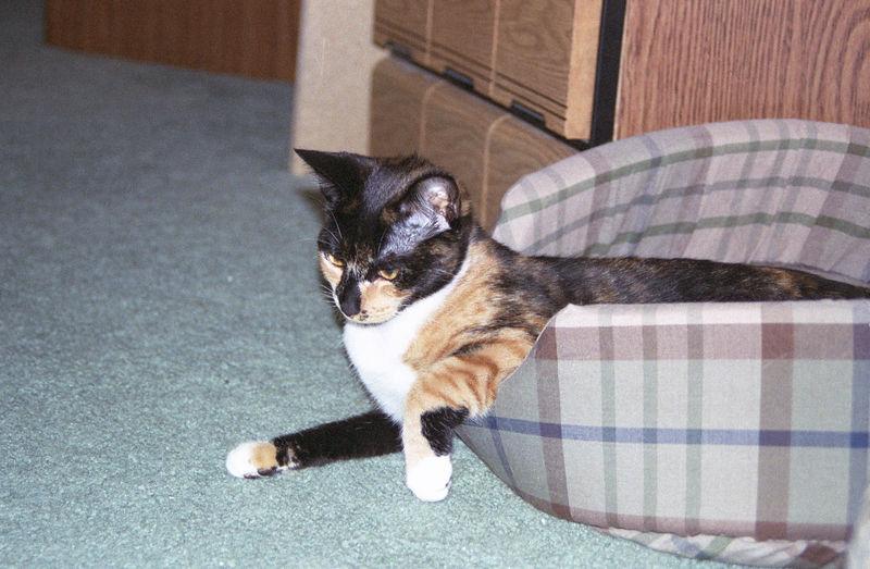 2003 12 - Cats 11.jpg