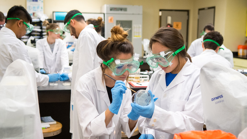 Cassandra Pena and Yulissa Lbarra in Microbiology