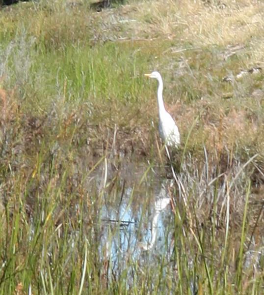 Moora Moora Reservoir water bird