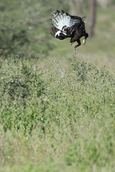 Serengeti_Feb_2013_FH0T3313.tiff.jpg